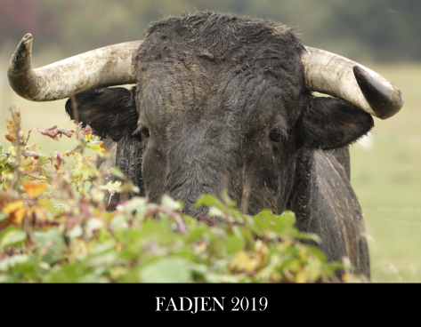 Calendrier Vistaprint 2019.Calendrier Fadjen 2019 Association Anti Corrida
